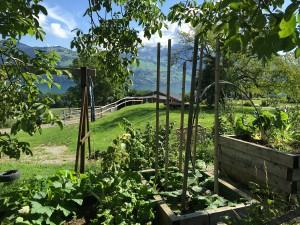 Gemüsegarten Stall